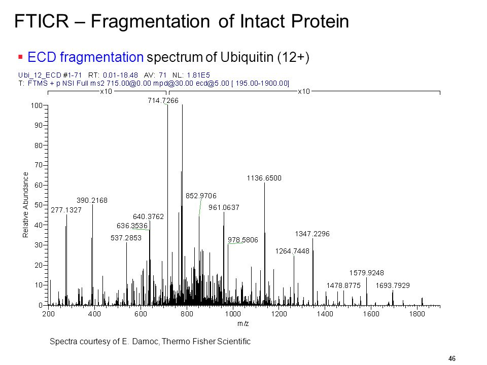 FTICR – Fragmentation of Intact Protein