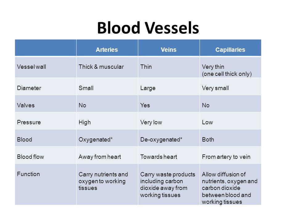 Blood Vessels Arteries Veins Capillaries Vessel wall Thick & muscular