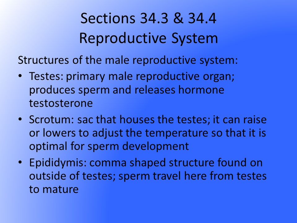 Sections 34.3 & 34.4 Reproductive System