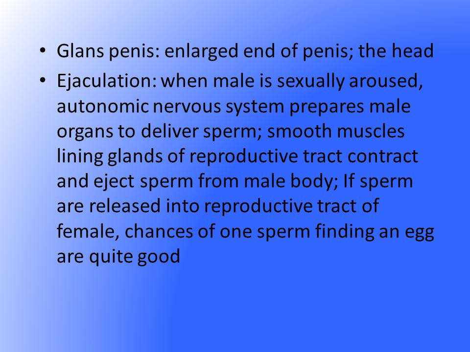 Glans penis: enlarged end of penis; the head