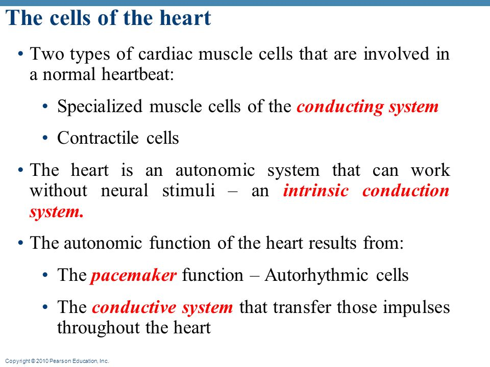 The Cells Of The Heart Two Types Of Cardiac Muscle Cells That Are