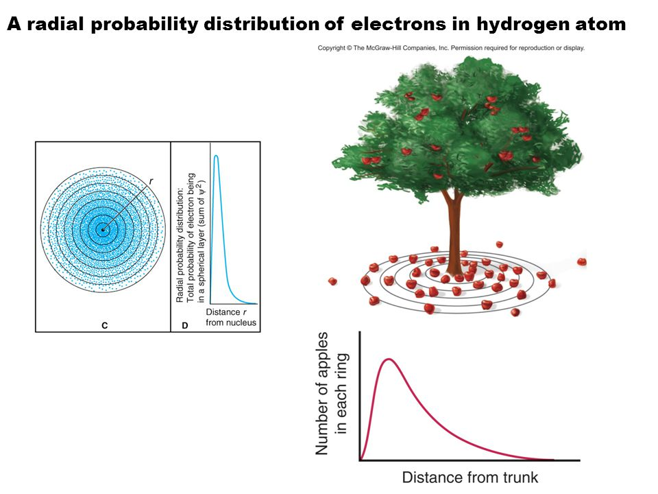 A radial probability distribution of electrons in hydrogen atom