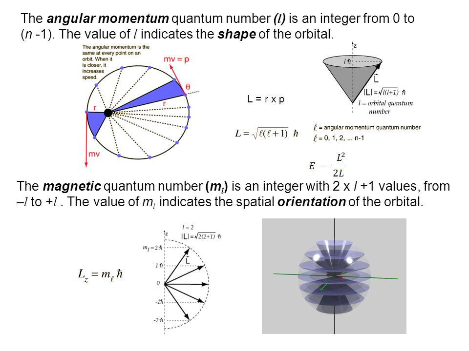 The angular momentum quantum number (l) is an integer from 0 to (n -1)