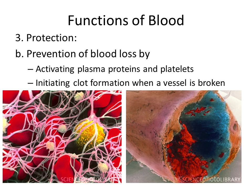 Functions of Blood 3. Protection: b. Prevention of blood loss by