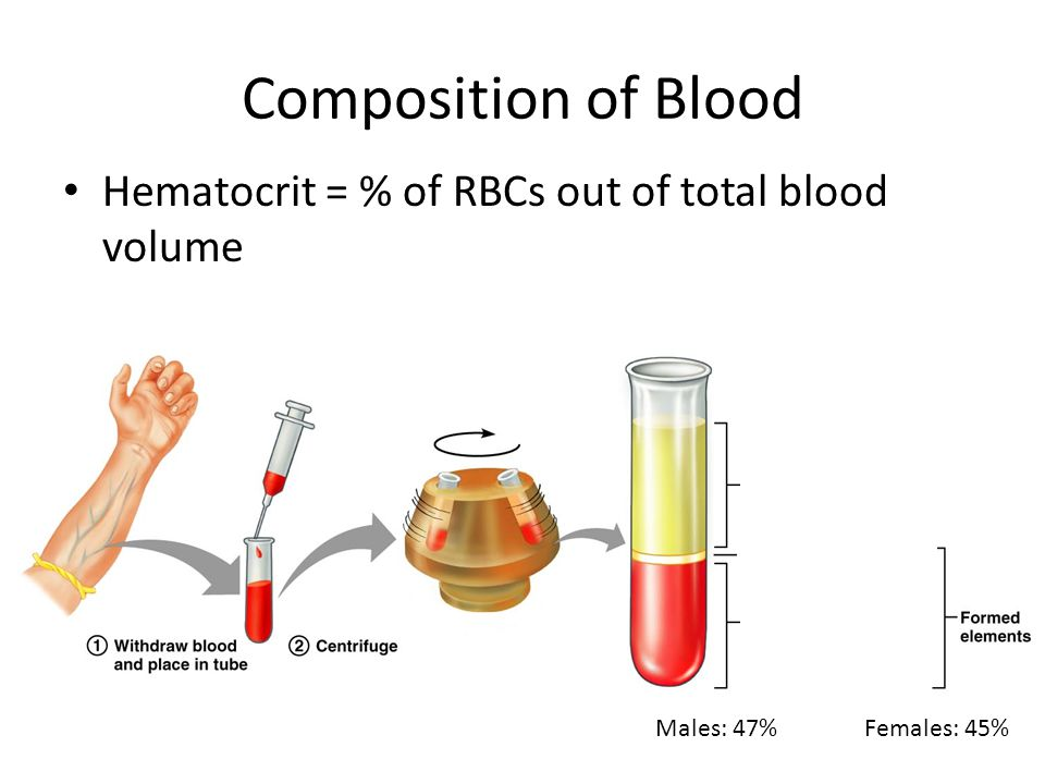 Composition of Blood Hematocrit = % of RBCs out of total blood volume