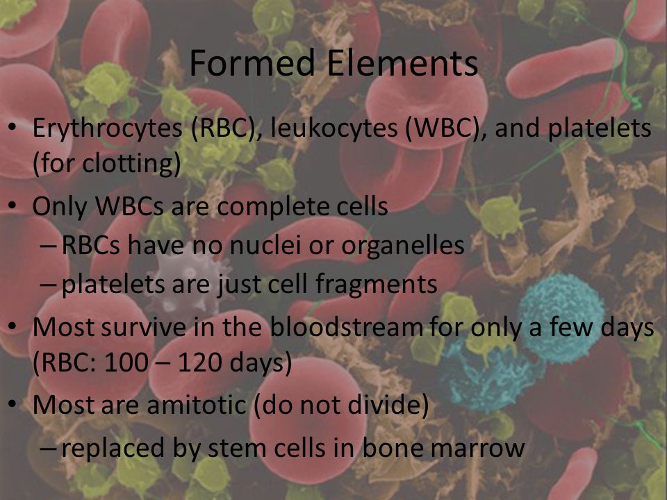 Formed Elements Erythrocytes (RBC), leukocytes (WBC), and platelets (for clotting) Only WBCs are complete cells.