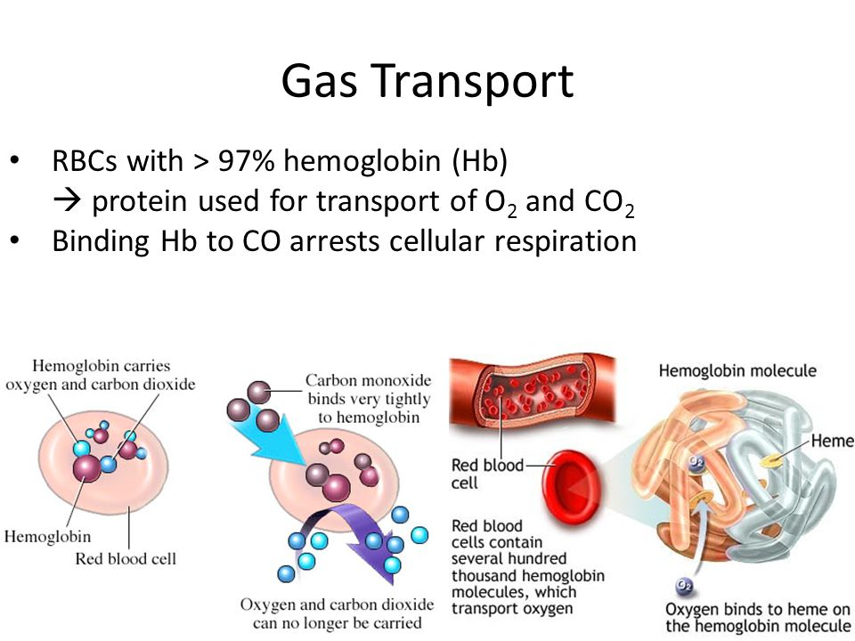 Gas Transport RBCs with > 97% hemoglobin (Hb)
