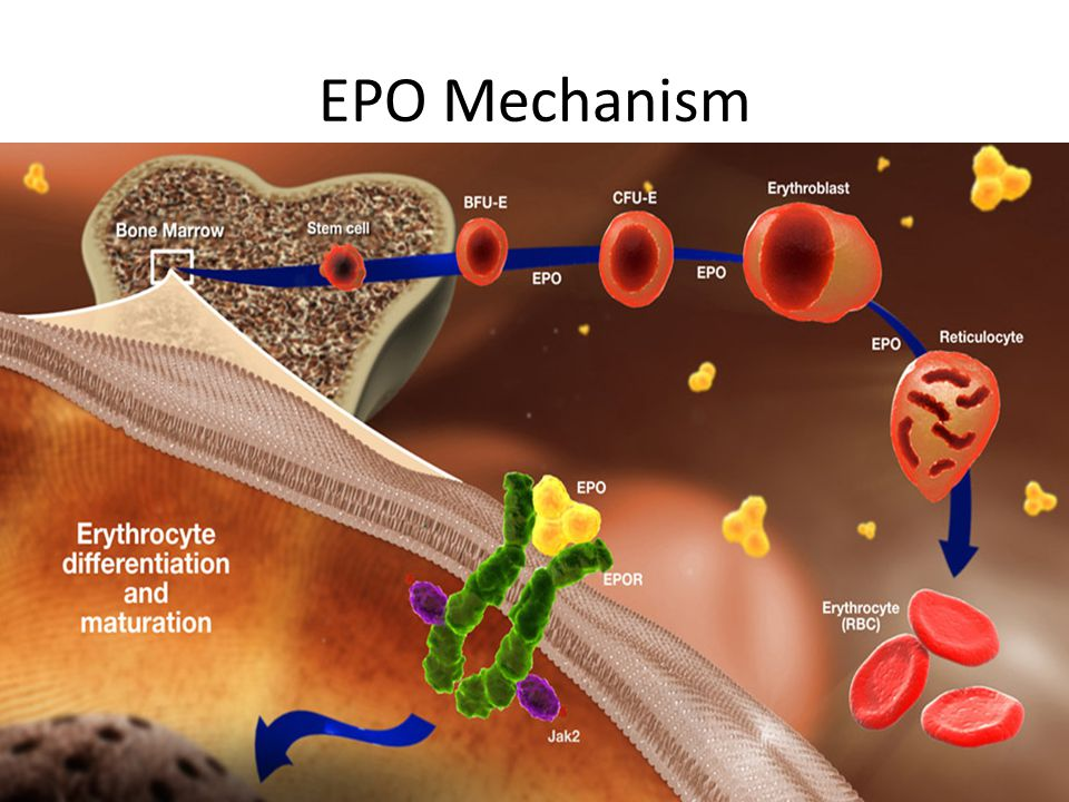 EPO Mechanism Imbalance Start Stimulus: Hypoxia due to