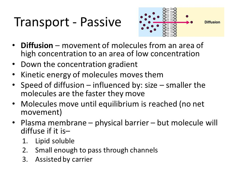 Transport - Passive Diffusion – movement of molecules from an area of high concentration to an area of low concentration.