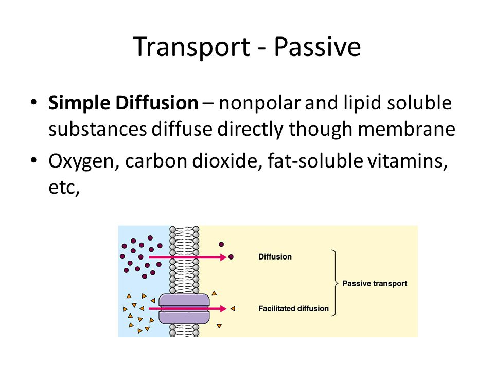 Transport - Passive Simple Diffusion – nonpolar and lipid soluble substances diffuse directly though membrane.