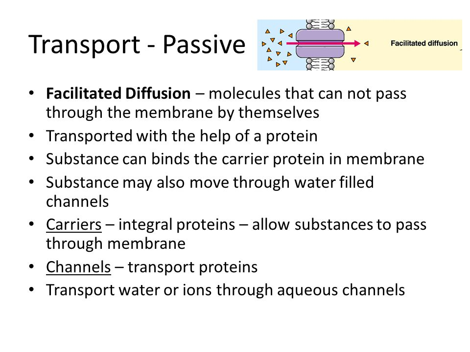 Transport - Passive Facilitated Diffusion – molecules that can not pass through the membrane by themselves.