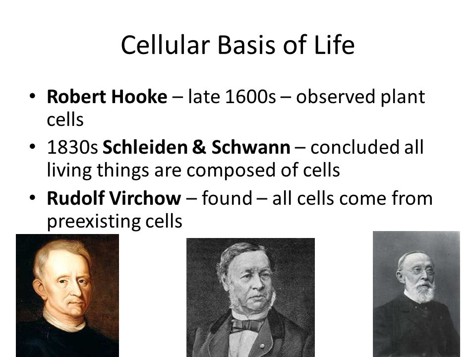Cellular Basis of Life Robert Hooke – late 1600s – observed plant cells.