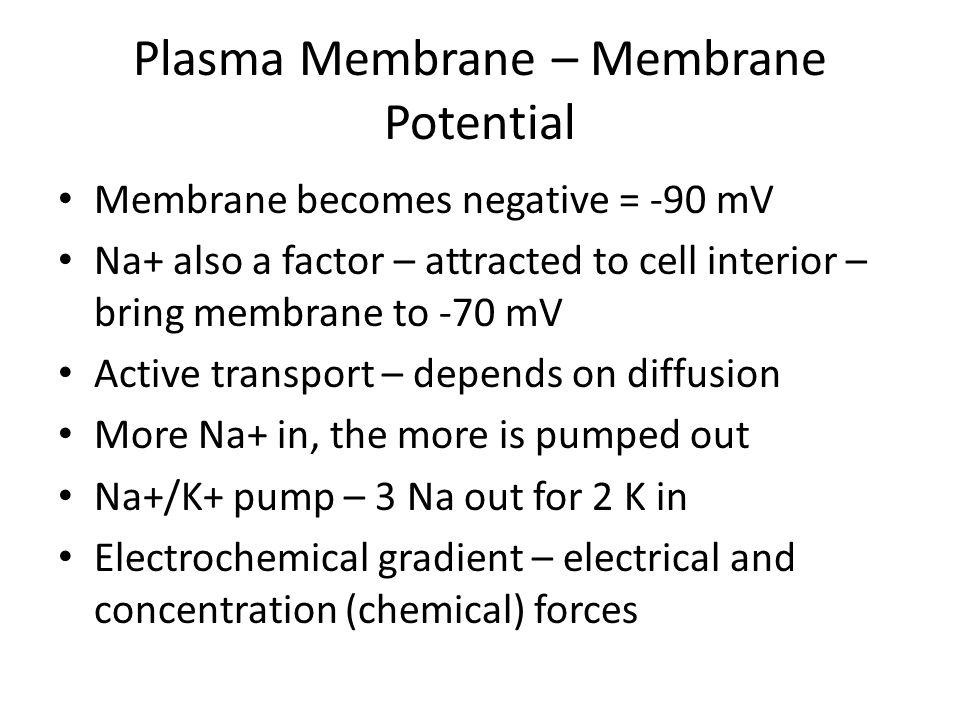 Plasma Membrane – Membrane Potential