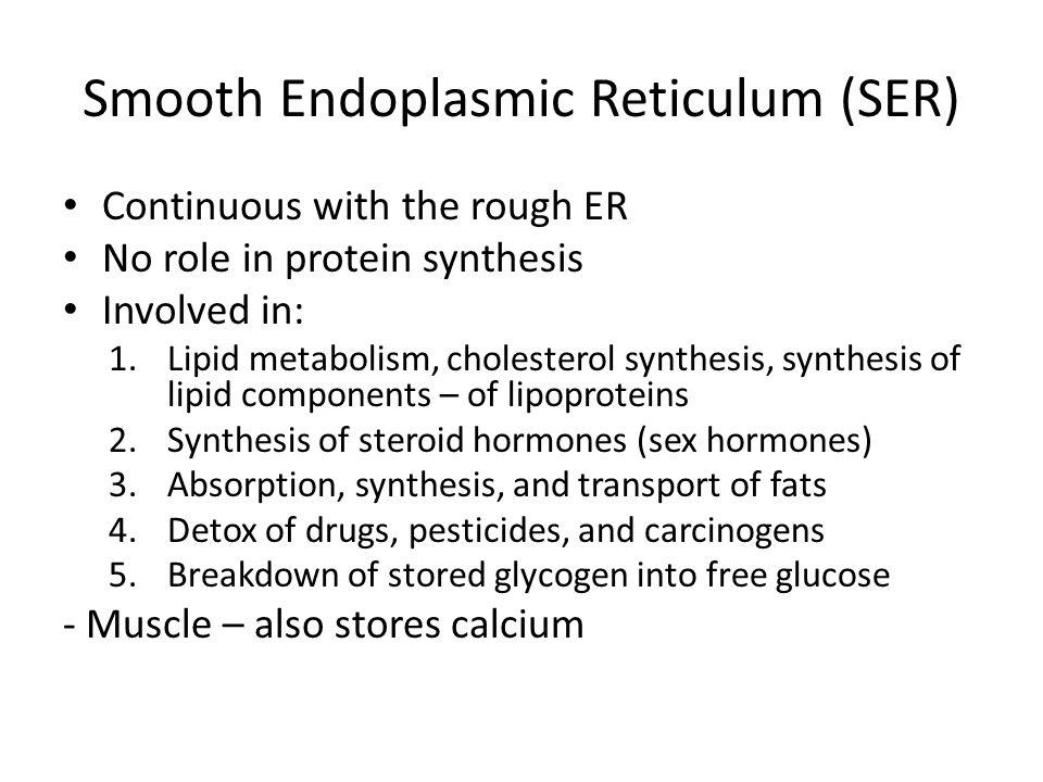 Smooth Endoplasmic Reticulum (SER)