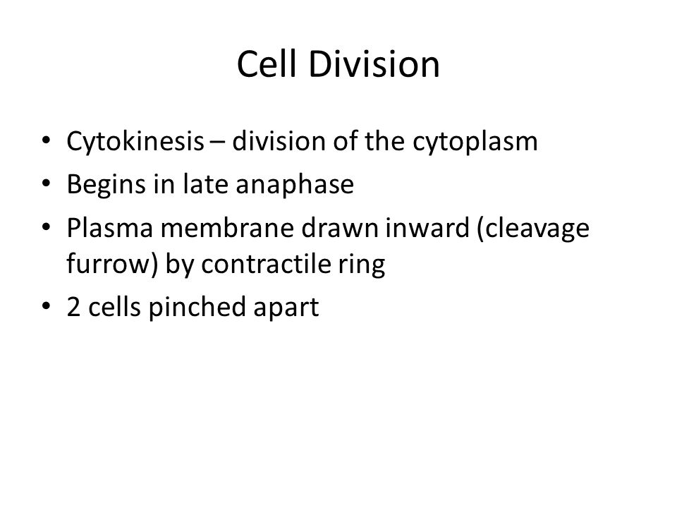 Cell Division Cytokinesis – division of the cytoplasm