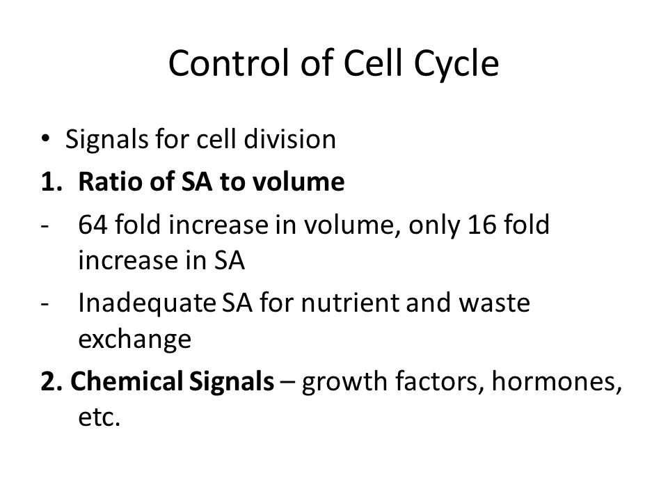 Control of Cell Cycle Signals for cell division Ratio of SA to volume