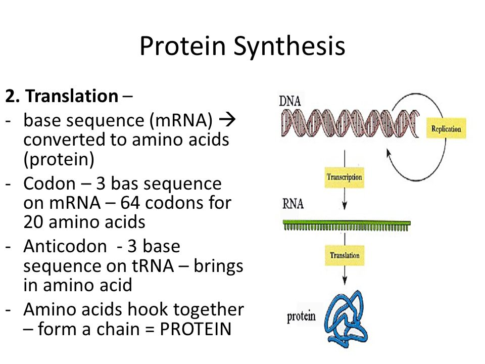 Protein Synthesis 2. Translation –
