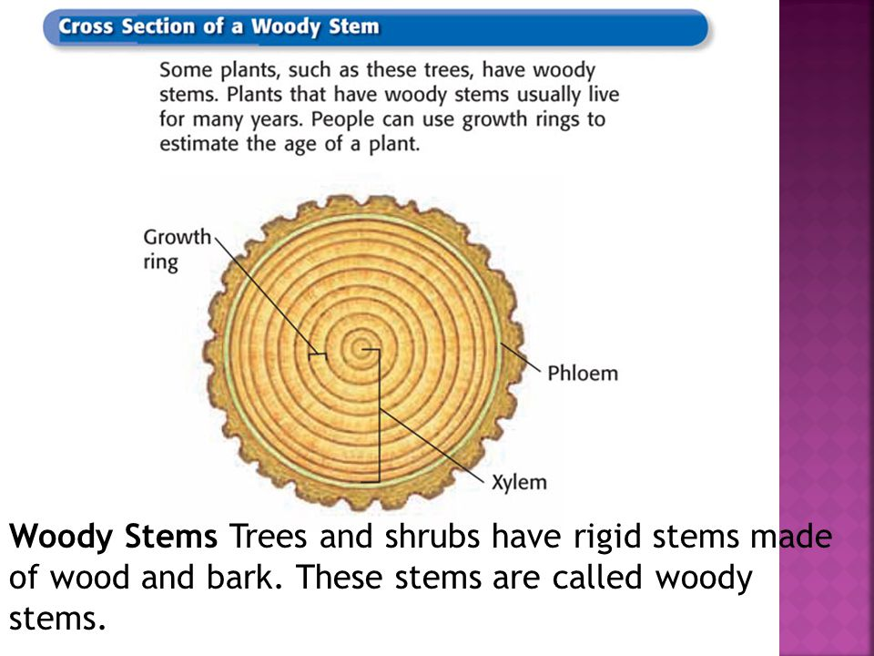 Chapter 12 Section 4 Structures of Seed Plants.