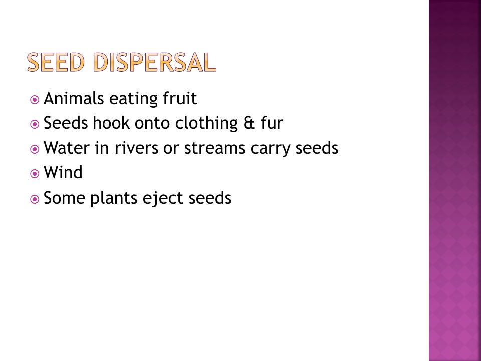 Seed dispersal Animals eating fruit Seeds hook onto clothing & fur