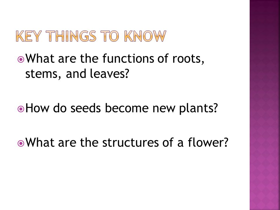 Key things to Know What are the functions of roots, stems, and leaves