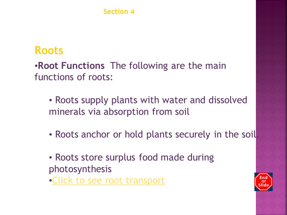 Chapter 12 Section 4 Structures of Seed Plants. Roots. Root Functions The following are the main functions of roots: