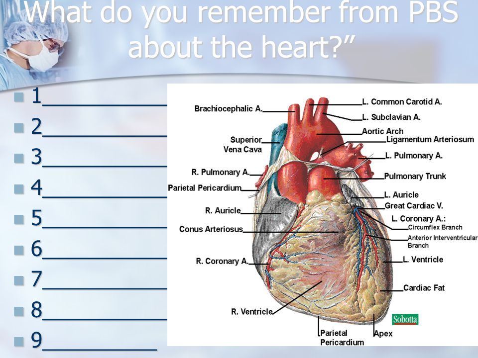 What do you remember from PBS about the heart