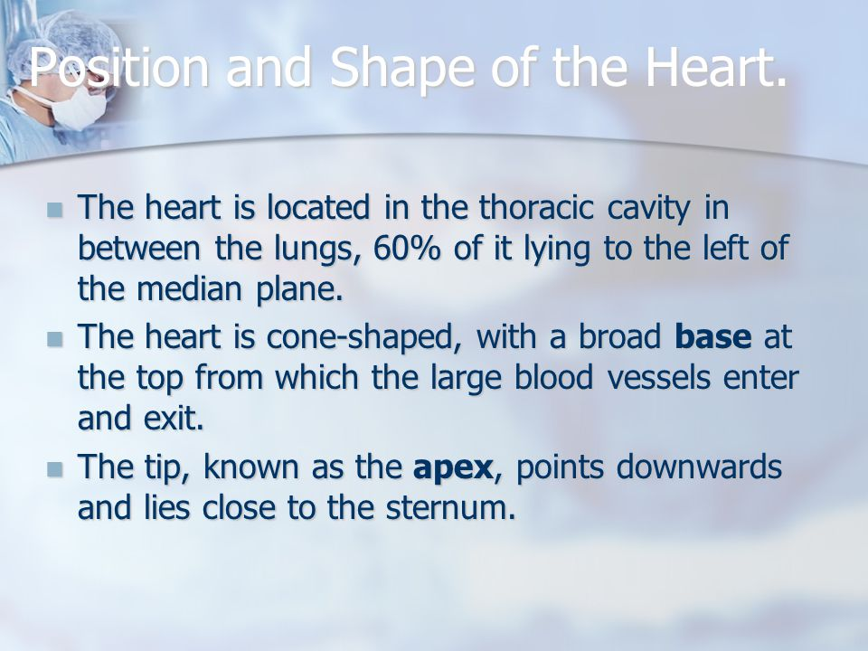 Position and Shape of the Heart.