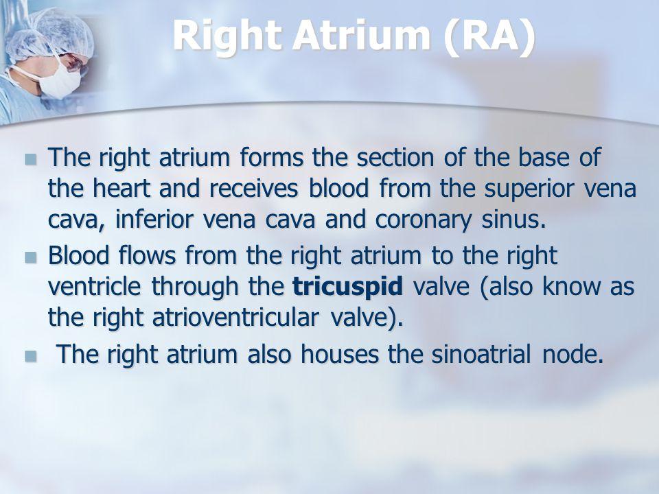 Right Atrium (RA)