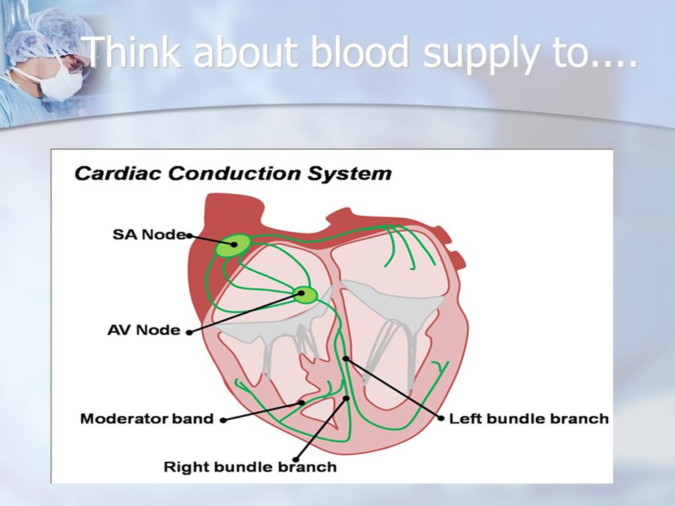 Think about blood supply to....