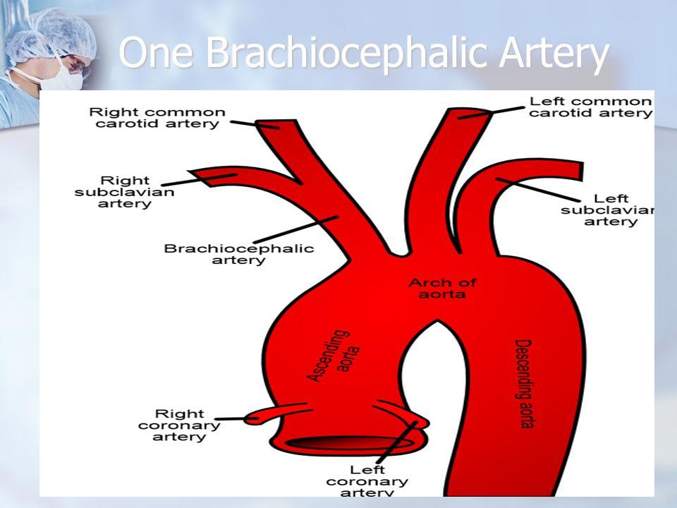 One Brachiocephalic Artery