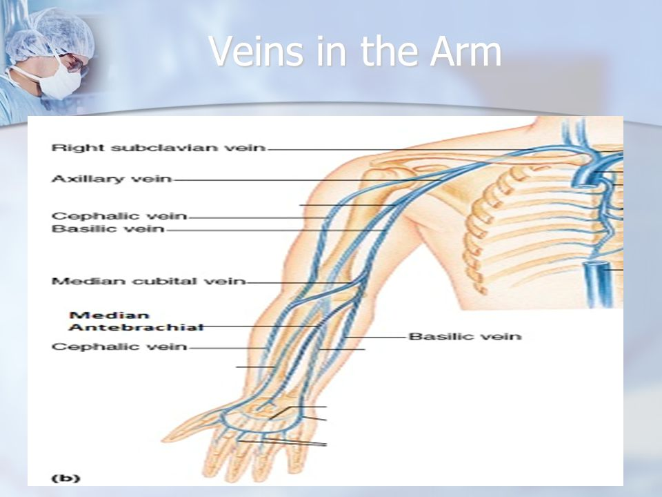 Veins in the Arm