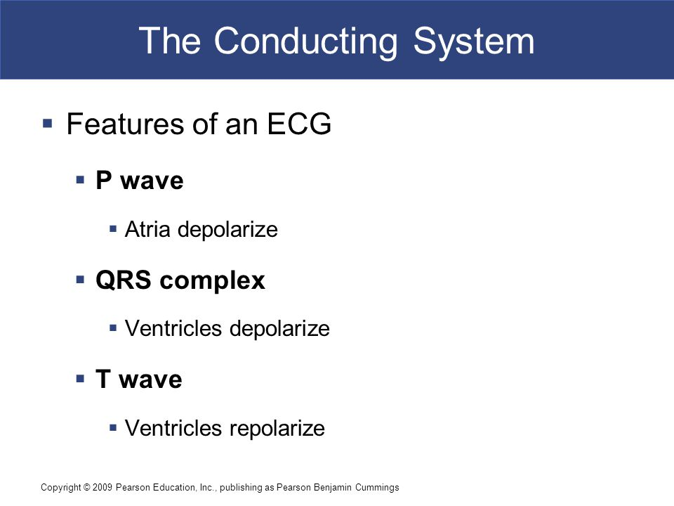 The Conducting System Features of an ECG P wave QRS complex T wave