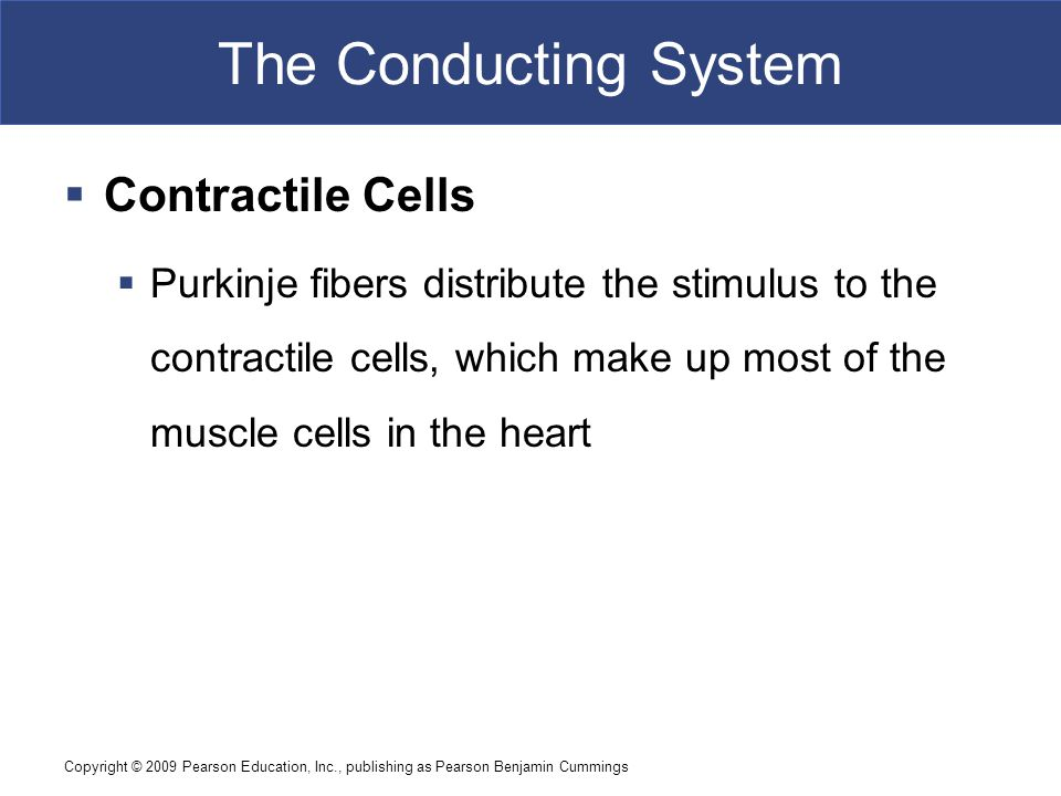 The Conducting System Contractile Cells