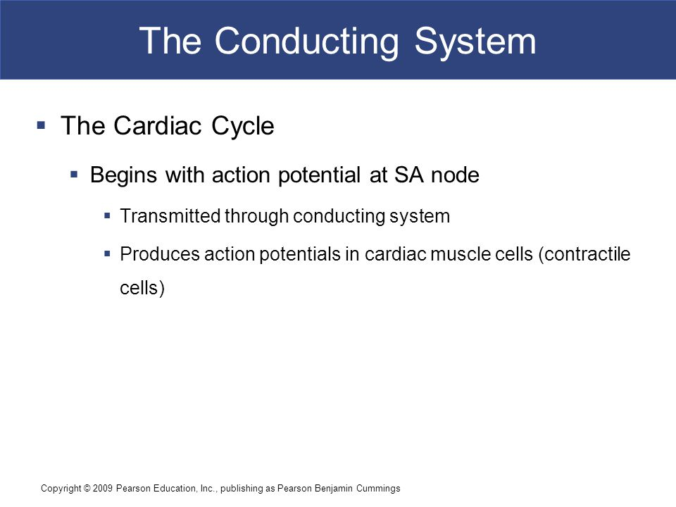 The Conducting System The Cardiac Cycle