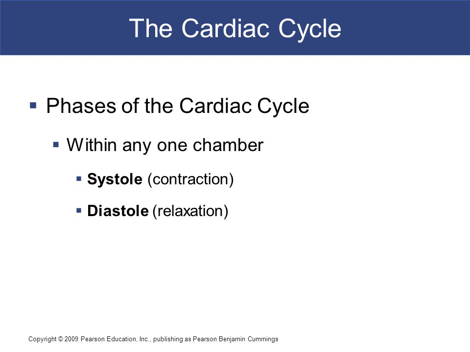 The Cardiac Cycle Phases of the Cardiac Cycle Within any one chamber
