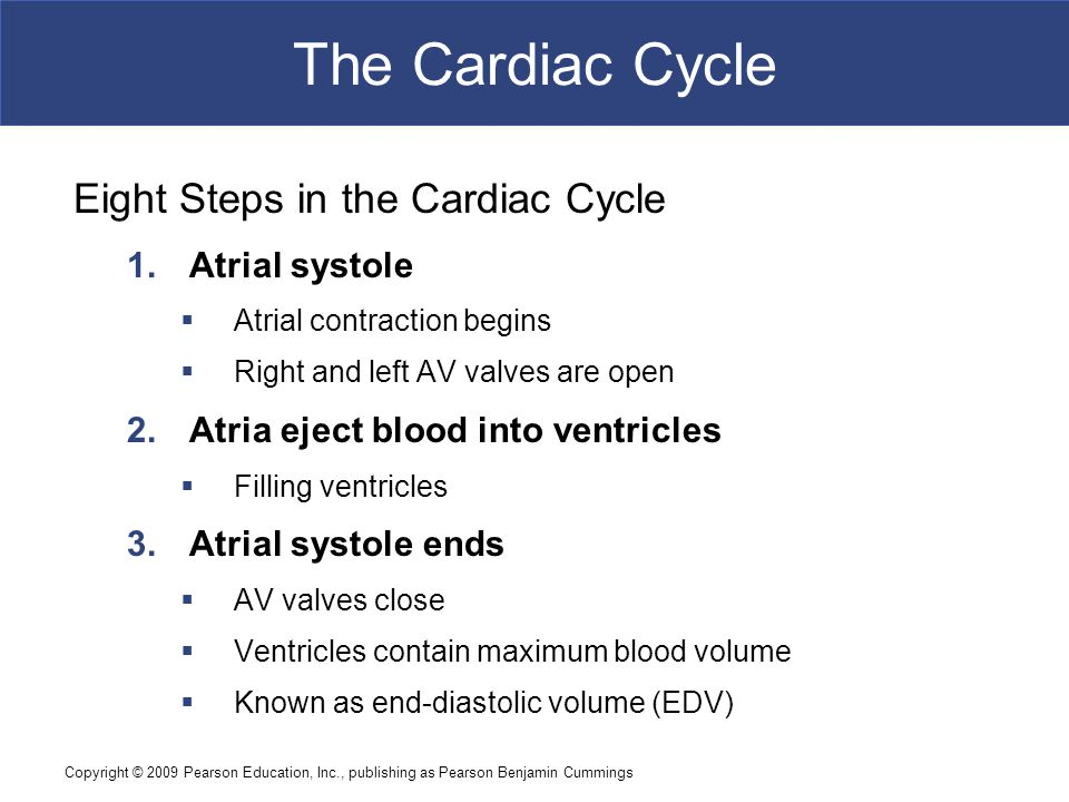 The Cardiac Cycle Eight Steps in the Cardiac Cycle Atrial systole