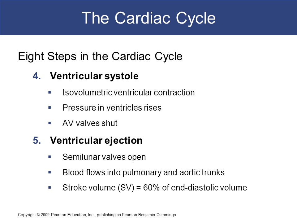 The Cardiac Cycle Eight Steps in the Cardiac Cycle Ventricular systole