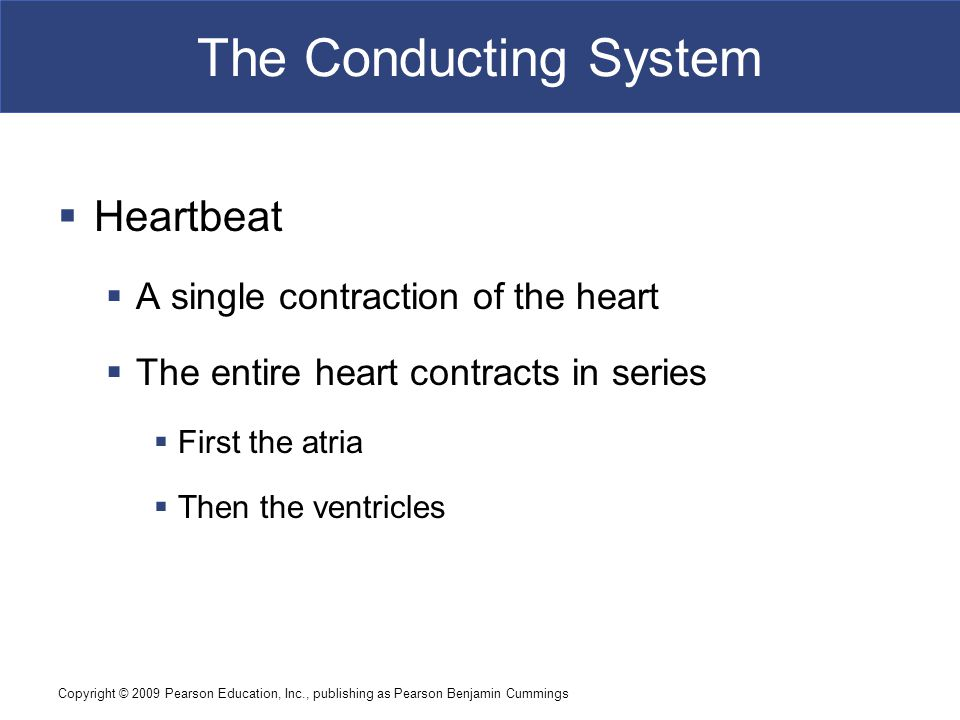 The Conducting System Heartbeat A single contraction of the heart
