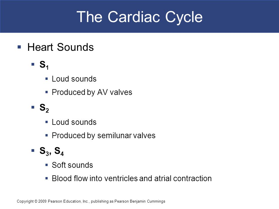 The Cardiac Cycle Heart Sounds S1 S2 S3, S4 Loud sounds