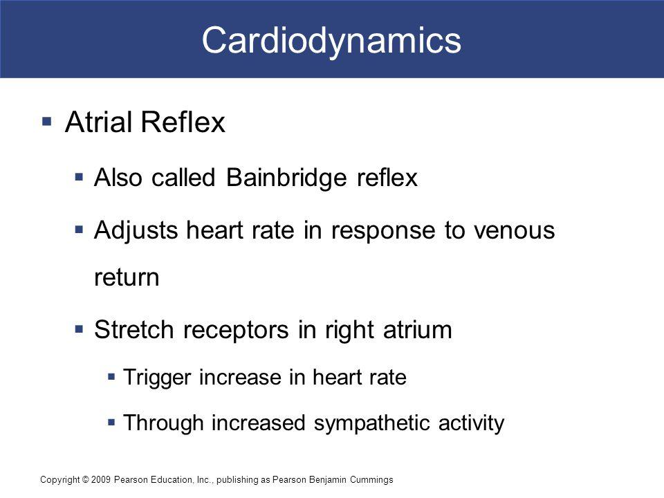 Cardiodynamics Atrial Reflex Also called Bainbridge reflex