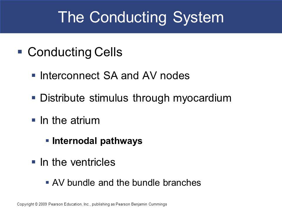 The Conducting System Conducting Cells Interconnect SA and AV nodes