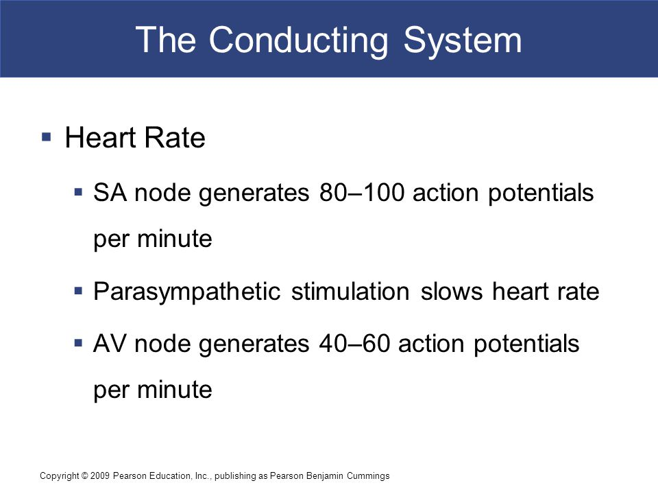 The Conducting System Heart Rate