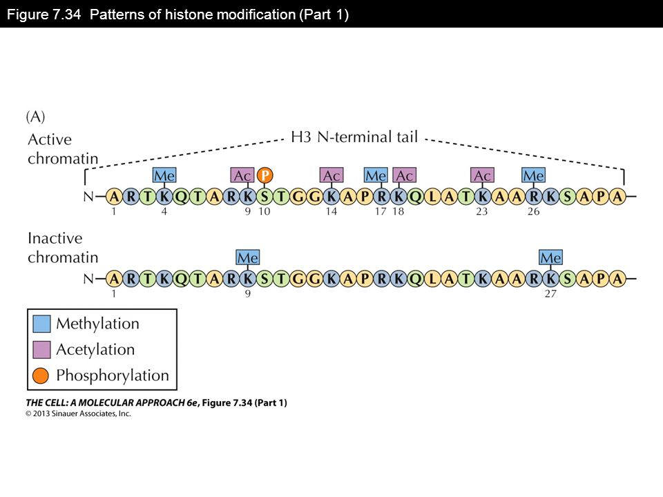 Figure 7.34 Patterns of histone modification (Part 1)
