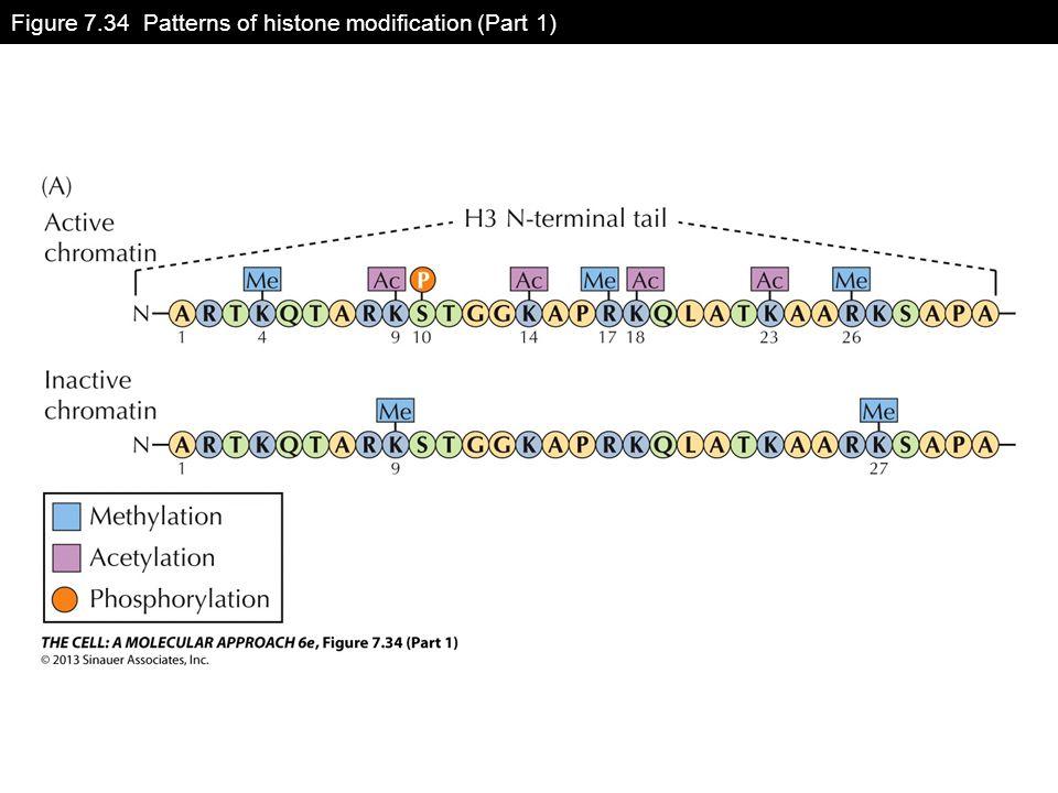 Figure 7.34 Patterns of histone modification (Part 1)