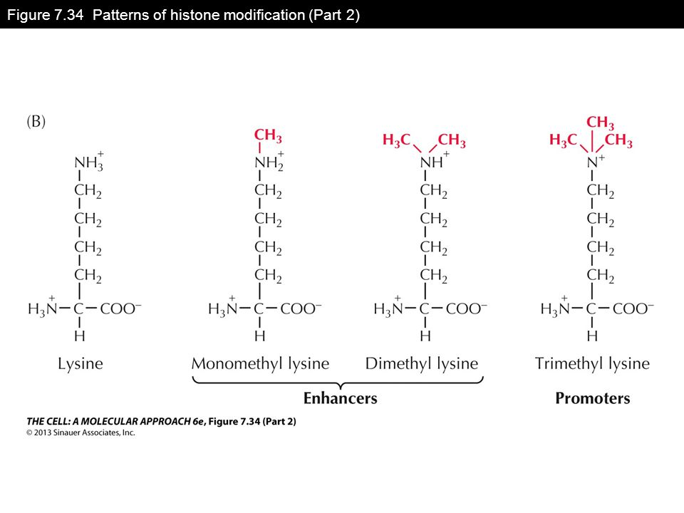 Figure 7.34 Patterns of histone modification (Part 2)