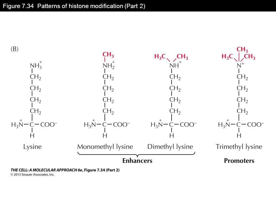 Figure 7.34 Patterns of histone modification (Part 2)