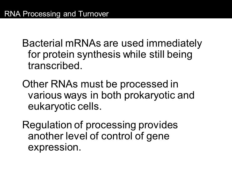 RNA Processing and Turnover