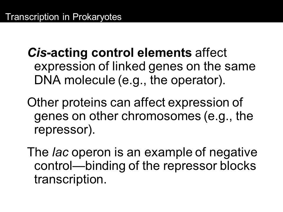 Transcription in Prokaryotes