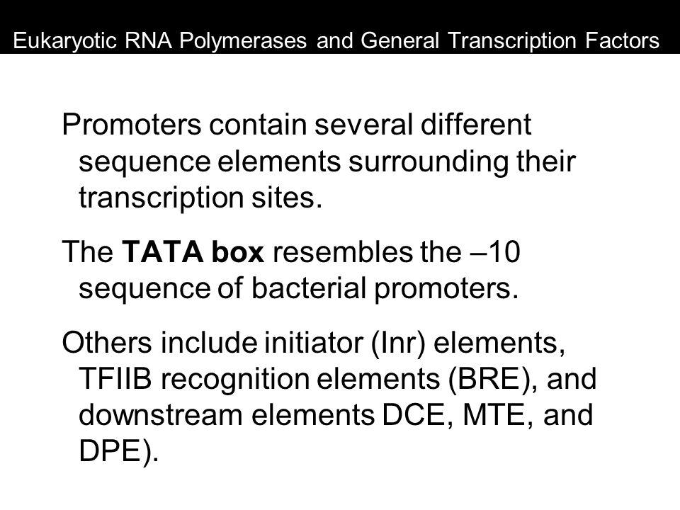 Eukaryotic RNA Polymerases and General Transcription Factors