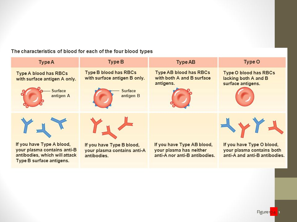 The characteristics of blood for each of the four blood types
